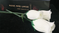 Rose & Vase by Wenzi Studio Presented by Bond Lee